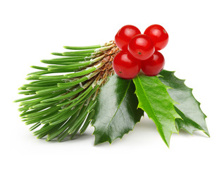 Pine tree branch and Holly berry leaves.