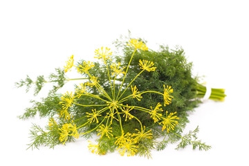 Bunch of fresh dill and flower. Isolated on white background