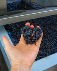 coeur de raisin