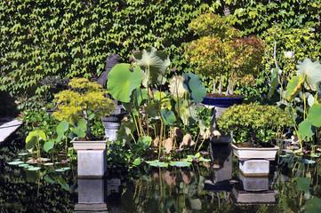 Bonsai in park Anduze bamboo