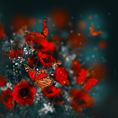 Fototapete - Field of poppies and green grass and butterfly