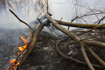 Burning branch in the burnt forest