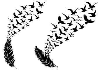 feathers with flying birds, vector Wall mural