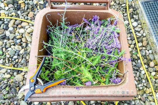 Gartenschere mit Biotonne und Schnittgut