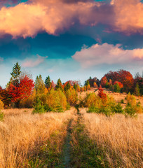 Wall Mural - Colorful autumn sunset in the Carpathian mountains.