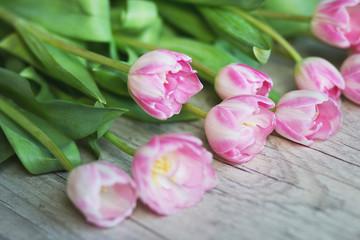 Aluminium Prints Tulip Tulips on a wooden background
