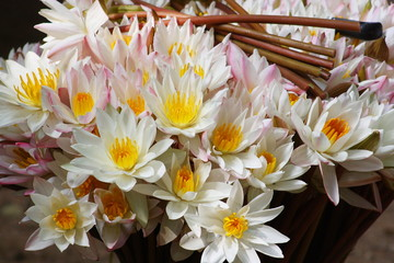 Flower offerings at a Buddhist monastery