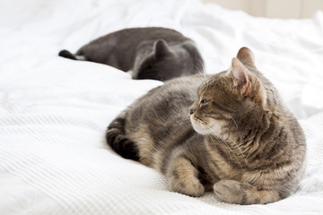 two cats lying on a white blanket