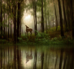 Fantasy fawn in a wild forest
