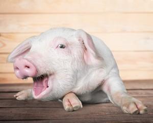Farm pig.