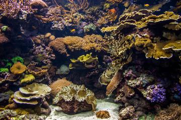 Anenome in aquarium.