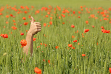 Hand with thumbs up in the middle of a meadow