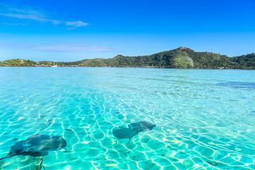 Razze con sfondo Bora Bora