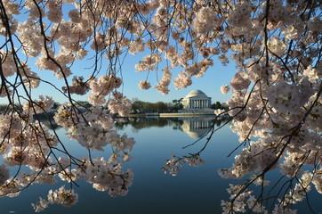 Cherry Blossom Festival. Washington, DC, USA