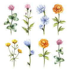 Watercolor wild flowers illustrations