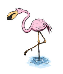 Flamingo, a hand drawn vector illustration of a cute flamingo bird standing on one foot on the water.