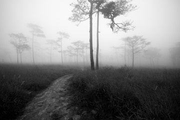 Tree in the center of picture with fog background black and whit