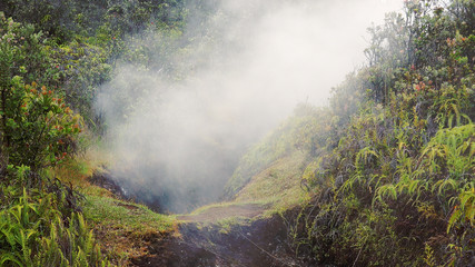 Steam Rising From Vent in Jungle at Hawaii Volcanoes National Pa