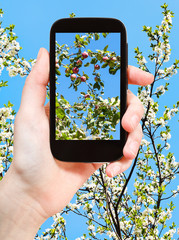 photo of apples on twig with blossoms and blue sky