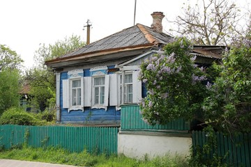 old wooden house and a lilac bush