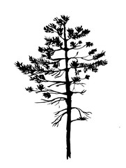 young pine tree with needles sketch graphics vector illustration