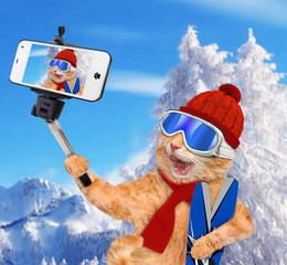 Cat with skis taking a selfie together with a smartphone.