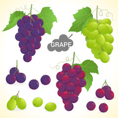 Set of grapes in various styles vector format