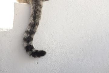 gatto su un muretto