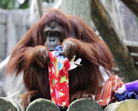 Holiday Monkey Business
