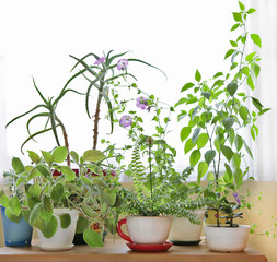 house plants on the table
