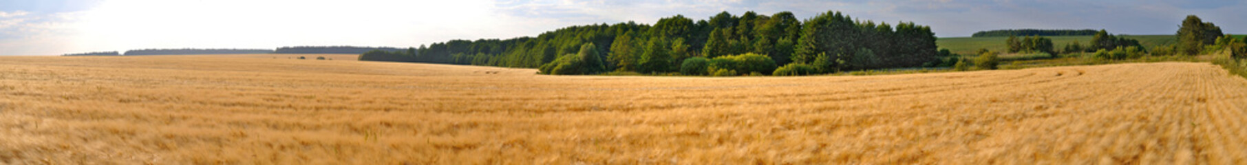 Tuinposter Platteland wheat field panorama