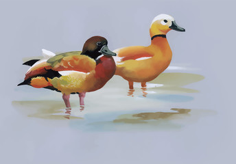 Geese flock swimming on pond watercolor vector illustration