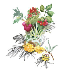 Watercolor berries on white background