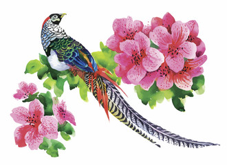 Hand drawn pheasant in the grass and flowers, isolated on white