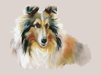 Collie Animal dog watercolor illustration vector