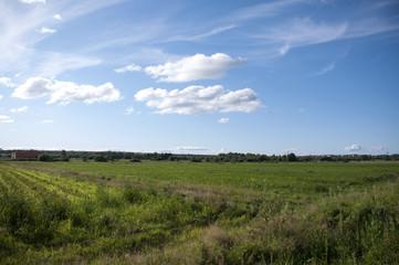 Сельскохозяйственное поле под голубым небом