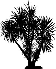 large black isolated palm tree