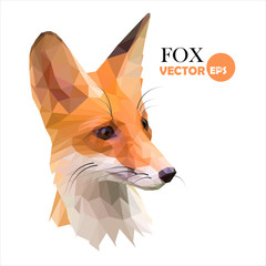 Fox. Red foxes low polygon style. abstract Fox isolated on white background, picture of a Fox can be used as a logo or icon. Fox sign vector illustration.