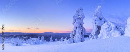 Sunset over frozen trees on a mountain, Levi, Finnish Lapland