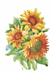 The composition of yellow sunflower painted in watercolor for