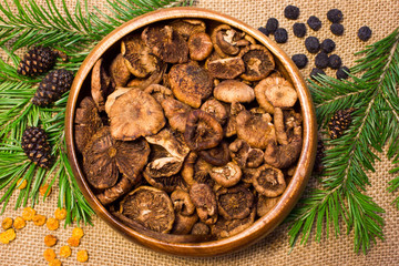 mushrooms with pine branches