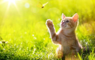 Fototapeta art Young cat / kitten hunting a ladybug with Back Lit obraz