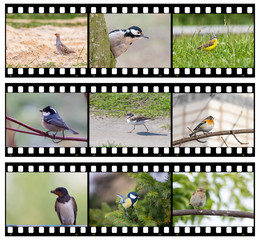 Film strip filled with my photos of birds. Animal film about small birds.