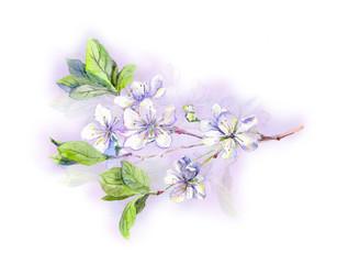 Blooming white cherry tree flowers-japanese sakura, watercolor