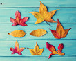 Autumn leafs over turquoise wood
