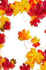 Herbstkarte bunt