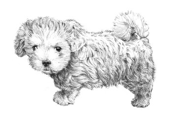 black and white hand drawn puppy dog picture, adorable puppy dog sketch isolated on white background for vet, pet grooming salon, veterinarian pet care or pet shop business card clip art, brochure ads