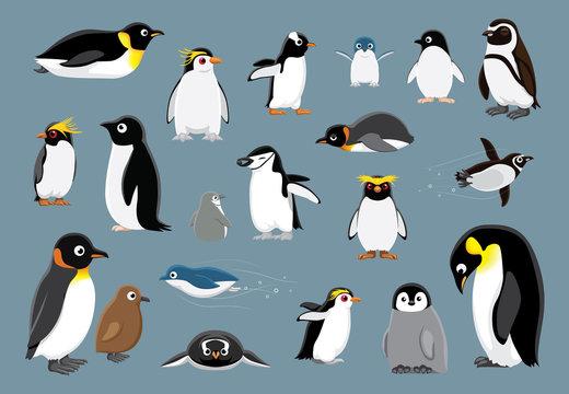 Various Penguins Cartoon Vector Illustration