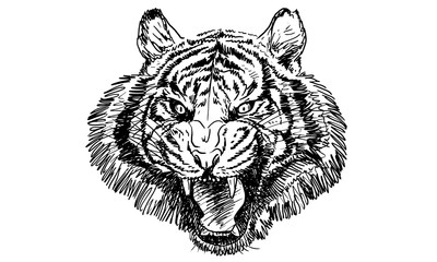 Tiger head, hand draw monochrome on white background.