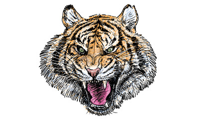 Tiger head, hand draw and paint on white background.